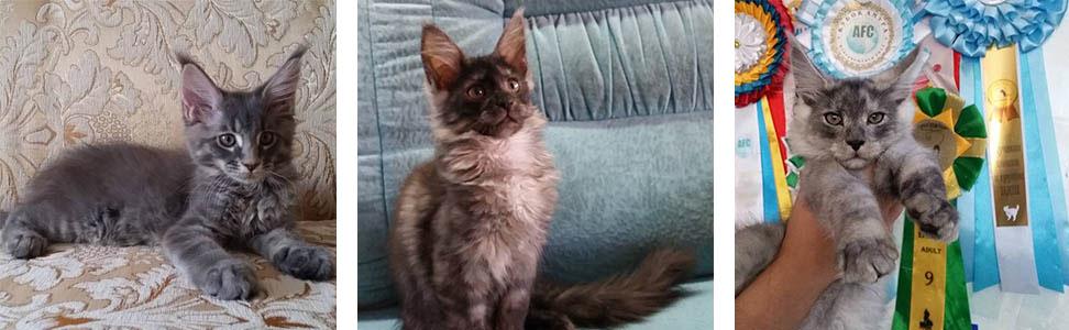 Альнаир котята